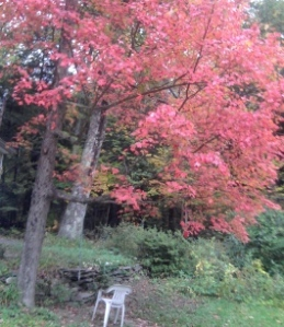 Red tree for blog